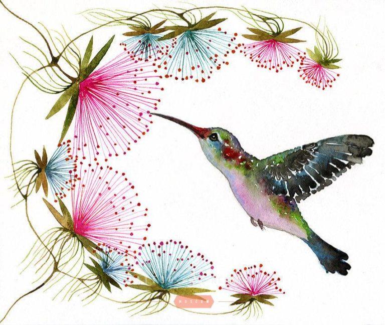 Нарисованные картинки с колибри